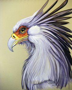 Secretary Bird 2 by HouseofChabrier.deviantart.com on @DeviantArt
