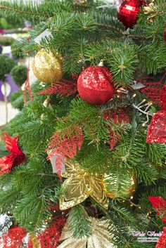 Seen at the Plantarium 2014 Fair in Boskoop, Holland. This bohemian tree with shiny red and gold balls. Make your tree truly spectacular this Christmas. #christmas #tree #exotic #bohemian #red #gold #shiny