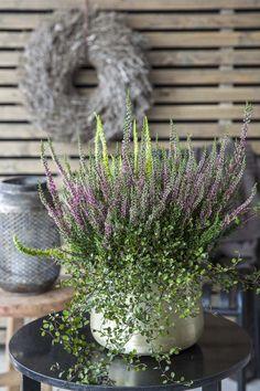 Inngangsparti for hverdag og fest Outdoor Pots, Outdoor Garden Decor, Garden Yard Ideas, Outdoor Gardens, Fall Planters, Garden Planters, Succulents Garden, Planting Flowers, Autumn Garden