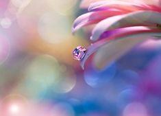 Kropla wody na płatku kwiatu Macro Photography, Photography Photos, Pastel, Instagram, Blur, Artist, Cake, Crayon Art, Melting Crayons