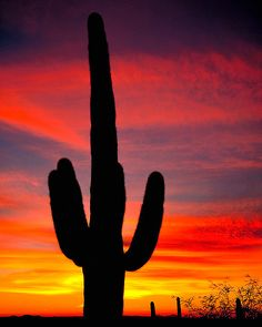 Saguaro in the sunset Beautiful Sky, Beautiful Landscapes, Beautiful World, Beautiful Places, Beautiful Pictures, Desert Dream, Desert Sunset, Desert Art, Sky Photos