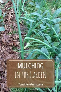 Mulching is an essential component of the garden that is often overlooked, but can save time in the long run. Find out what mulch is, how to mulch properly, and the various types of mulch.