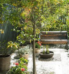 Los árboles frutales le dan un toque especial a tu jardín. ¡Además es fruta orgánica que puedes aprovechar esta temporada! #MiJardinPerfecto.  #Primavera #Deco #Terraza  #Frutales #Hogar #easychile #easytienda #easy #Concurso #Jardin Deco, Plants, Gardens, Fruit Trees, Houses, Vegetable Garden, Spring, Furniture, Deko