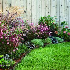 Sun-loving plants.  Heuchera, ornamental grass, and silvery artemisia mingle with abutilon, airy clusters of pink gaura, coneflower, and hydrangea to soften and hide the base of the deck.    Bark mulch covers the soil between plants; Trex benderboard finishes the front edge.    Plant cuphea, salvia, and verbena for color among mixed basils, eggplant, and pepper.