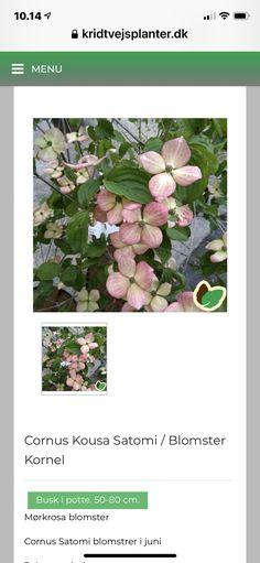 Plants, Art, Art Background, Flora, Kunst, Gcse Art, Plant, Art Education Resources, Artworks