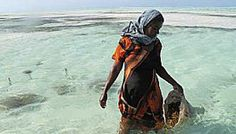 From Joanna Lipper's series for Picturing Power & Potential, Seaweed Farmers in Zanzibar