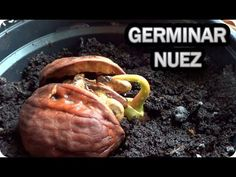 Garden Plants, Beef, Food, Youtube, Replant, Gardens, Vegetable Gardening, Orchards, Growing Spinach
