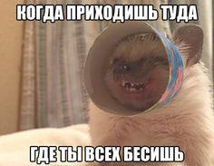 Русские (русскоязычные) смешные мемы. Мемасы ржач приколы 18+ ЧТБ Мемы на русском. Ёжик