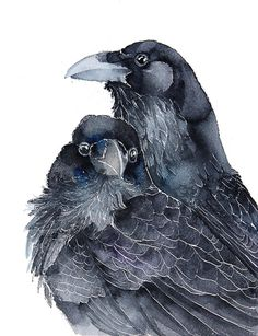 """culturenlifestyle: """" Watercolor Birds II by Karolina Kijak Poland based architect Karolina Kijak (previously featured here) is also a talented illustrator who specializes in watercolor bird portraits. Crow Art, Raven Art, Bird Art, Watercolor Bird, Watercolor Animals, Watercolour Painting, Watercolours, Watercolor Artists, Watercolor Portraits"""