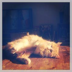 Trop belle la vie de chat !