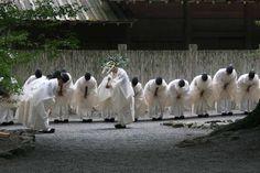 伊勢神宮「みけ祭」 : 風の吹くまま