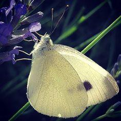 #wwnrs_memb #wwnk_memb #fotofanatics_macro_ #fotocatchers #mta_macro #flowersandmacro #great_flowers #wms_macro #everything_imaginable_ #nature_of_our_world #naturehippys_ #vzco_of_our_world #nature_sultans #igscflowers #gn_photos #greatnaturephotos #na_natures_art #your_life_etc #photoarena_nature #ptk_macro#natura_friends#samsungs6#explore_macro