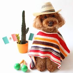 Puppies And Kitties, Cute Puppies, Kittens, Dogs, Happy Animals, Animals And Pets, Cute Animals, Pet Halloween Costumes, Halloween Ideas
