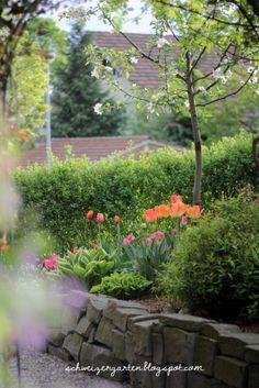 Hochbeet+Frühling+Tulpen+rot+orange+pink+rosa+violett+Apfelbaum+Beetgestaltung+Ein+Schweizer+Garten+Blog+Natursteinmauern+(6).JPG (427×640)