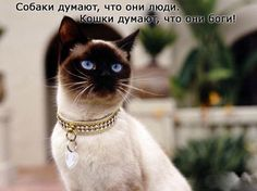 1368685009_www.radionetplus.ru-15.jpg (600×449)