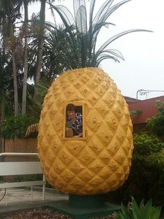 The moderately sized pineapple