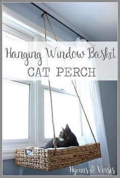 Cats Toys Ideas - diy hanging basket cat perch, how to, pets animals, repurposing upcycling - Ideal toys for small cats