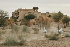 Fort of the Sun – Voyages & Paysages – Somewhere Surf, Marwari Horses, Cereal Magazine, Sandstone Wall, Yellow Fields, Clay Mugs, Thatched Roof, Open Window, The Dunes