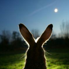 bunny   patricia van de camp