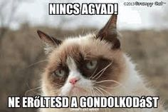 "The original ""Grumpy Cat"", Tardar Sauce, is actually kinda cute! Grumpy Cat Breed, Grumpy Cat Quotes, Grumpy Cat Meme, Cat Memes, Grumpy Kitty, Kitty Kitty, Funny Cats, Funny Animals, Cute Animals"