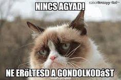"The original ""Grumpy Cat"", Tardar Sauce, is actually kinda cute! Grumpy Cat Breed, Grumpy Cat Meme, Grumpy Cat Quotes, Cat Memes, Grumpy Kitty, Kitty Kitty, Funny Cats, Funny Animals, Cute Animals"