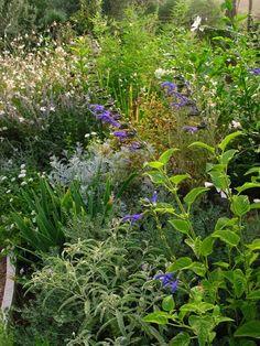 Estate nel Giardino Mediterraneo - Compagnia del Giardinaggio