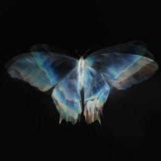 Blue Aesthetic Butterfly