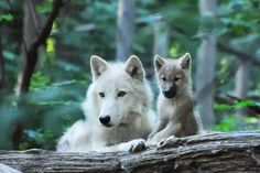 Amazing! Winterfrost with one of her pups!