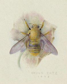 Bruno Ertz Bumblebee 1908
