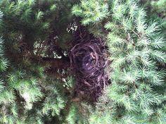 Baby birdies.     5-29-13