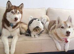 「実はお前たち3兄弟は本当の3兄弟ではないのだ」 シュールの殿堂入りボケ - ボケて(bokete)
