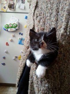 El mundo sería un mejor lugar si todos tuvieran un gato en sus bolsillos