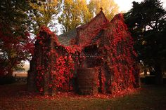 Red, Overgrown, Autumn/Fall Ivy, on what i think is a Church, in the Woods.