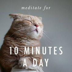Meditation cat knows best