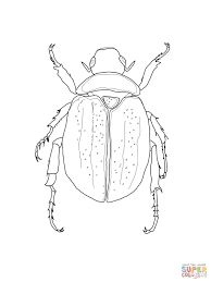 Image result for beetles drawing
