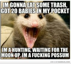 Im A F*cking Possum! I laughed WAY too hard at this.