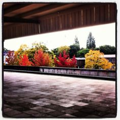 #Autumn in #Amsterdam | #station #Muiderpoort | barbaravisser on Instagram