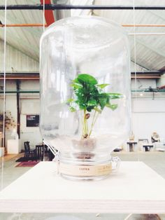 No maintainance plant, by Pikaplant at Dutch Design Week | hotograph by @dirksdotter