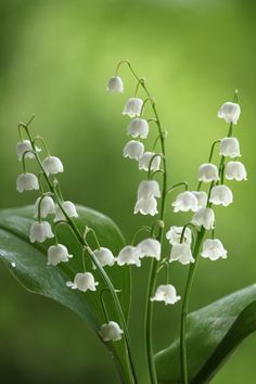 Flower Images, Flower Pictures, Flower Art, Pictures Of Spring Flowers, Spring Images, Flowers Nature, Exotic Flowers, Pretty Flowers, Small White Flowers