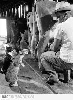 Fresh milk makes puss happy..