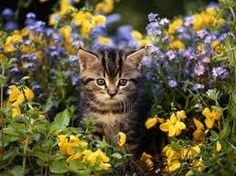 Swiftkit, she-cat, open