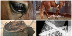 Please help and sign petition! Shut Down the Tennessee Walking Horse National Celebration!