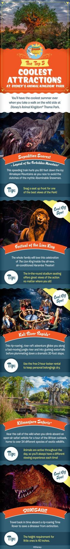 Check out the Top 5 Coolest Attractions at Disney's Animal Kingdom and get ready to have the Coolest Summer Ever as you plan your family vacation at Walt Disney World!