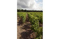 Château Tour Saint André Bordeaux, Vineyard, Saints, Tours, Outdoor, Stone Driveway, Wine Vineyards, Environment, Outdoors