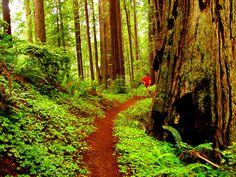 Trail running by Rock/Creek, via Flickr