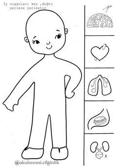 91 En Iyi Iskelet Sistemi Organlar Goruntusu Okul Oncesi Okul