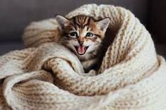 25 best cat quotes that perfectly describe your kitten - funny and funny - Funny pictures humor hilarious kittens - Funny Cat Fails, Funny Cats And Dogs, Funny Cat Memes, Hilarious, Cute Animals With Funny Captions, Cute Animals Puppies, Cute Baby Animals, Baby Puppies, Funny Animals