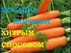 Посадка моркови хитрым способом! Ждем всходы через несколько дней! - YouTube