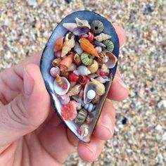 The Best Shell Beach Ever The cutest tiniest most perfect little shells ever so colorful too! The post The Best Shell Beach Ever appeared first on Summer Diy. Belle Image Nature, Image Nature Fleurs, Shell Beach, Seashell Crafts, Shell Art, Amazing Nature, Vacation Ideas, Vacation Quotes, Sea Glass