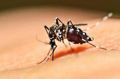 #Ya aparecieron algunos mosquitos que transmiten dengue - Nueva Ciudad: Nueva Ciudad Ya aparecieron algunos mosquitos que transmiten dengue…